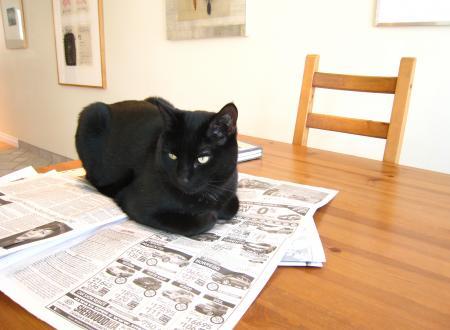テーブル猫
