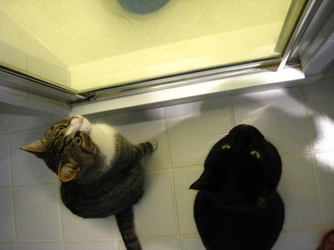 猫とバケツ