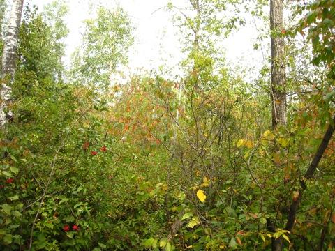 ホワイトマッド自然保護区4