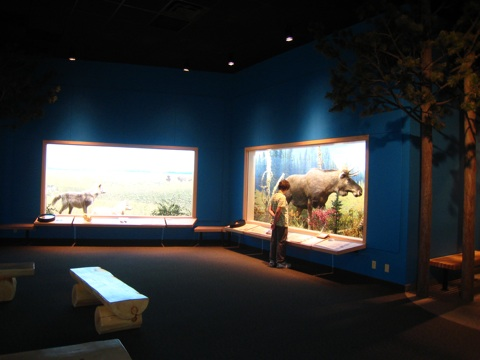 ロイヤルアルバータ博物館2