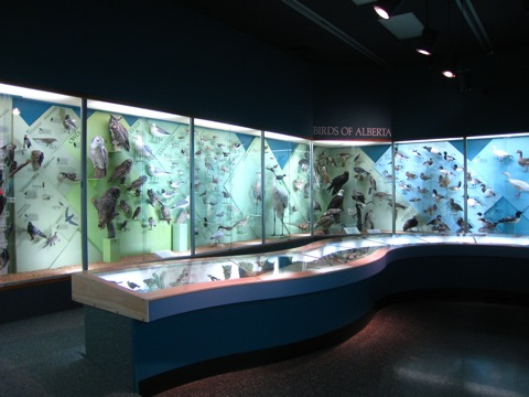 ロイヤルアルバータ博物館9