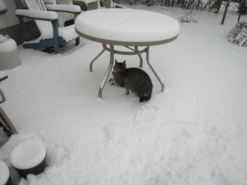 雪かき12