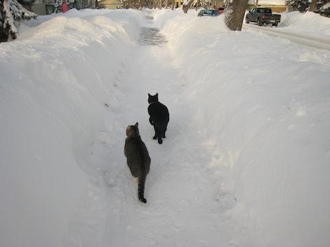 雪景色25