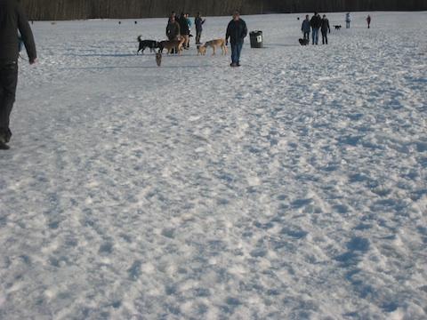 犬公園ターウィレガー