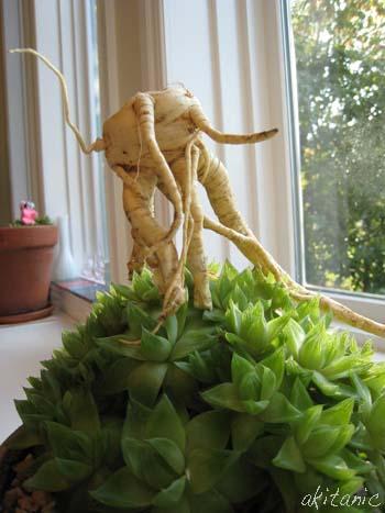 規格外野菜3