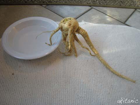 規格外野菜4