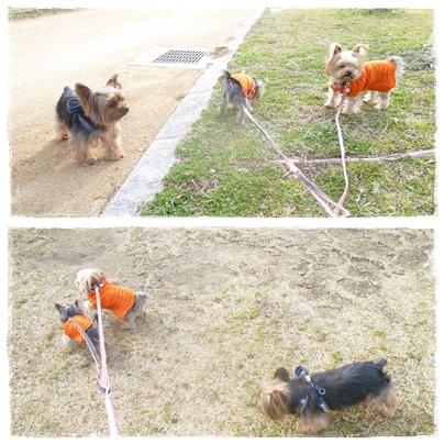 オレンジ散歩3