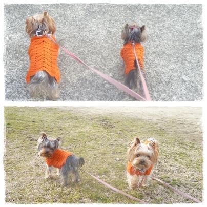 オレンジ散歩2