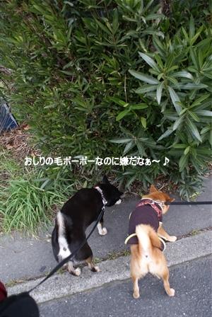 DSC08801_Rく