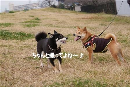 DSC08761_Rく
