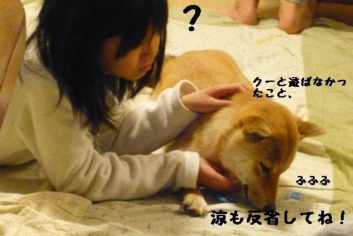 反省してない犬