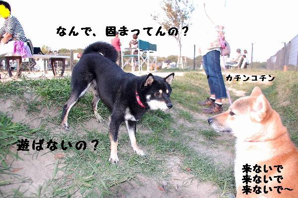 DSC_0189(1)(1).jpg
