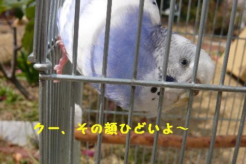 P1100251(1).jpg