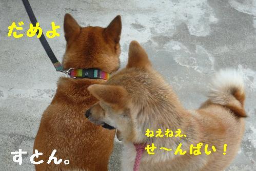 P1190144(1).jpg