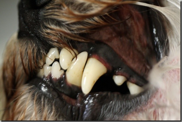 胡桃の歯 029