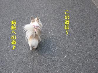 病院への道♪