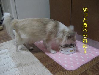 食べられた?