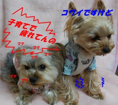 DSC_0187_20110326201024.jpg