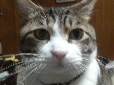 2009122407210000猫