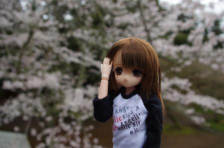 ひめのと桜3