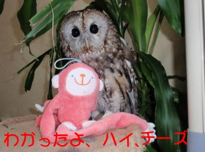 10-1-3-1__20101001105345.jpg