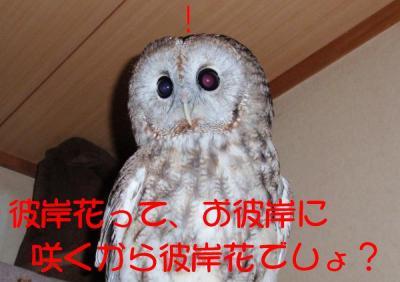 10-16-1-1_.jpg