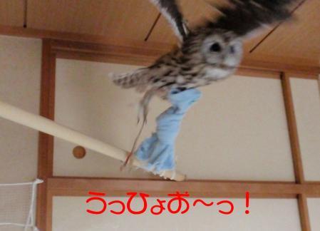 3-11-1_20100311084730.jpg