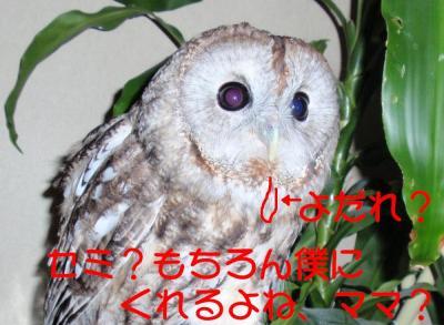 8-13-3-1_.jpg