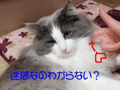 itti-1_.jpg