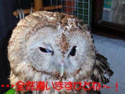 kyohi-2-1_1.jpg