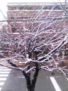 雪桜 110211_1038~001