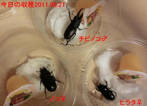 2011.06.21採集分