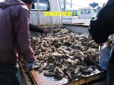 トラックいっぱいの牡蠣