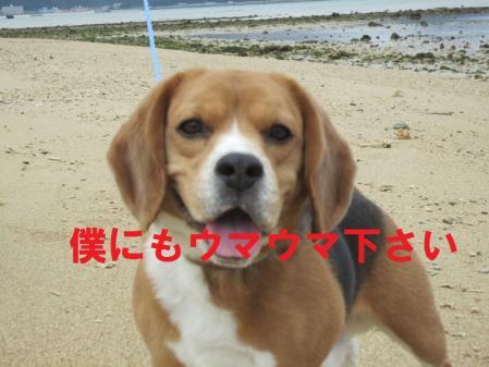 210_20120320184710.jpg