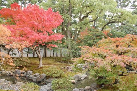 皇后宮常御殿の前の庭