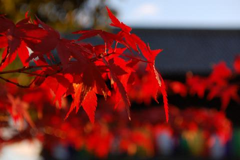 金戒光明寺の紅葉