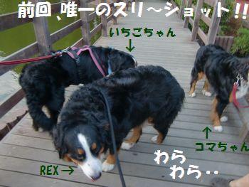 7月のバニの会だよ~!!