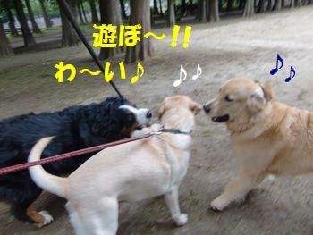みんなで一緒に遊ぼう~!!