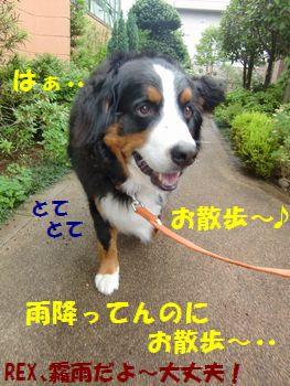 雨降ってんのにお散歩行く意味ってあんの!?