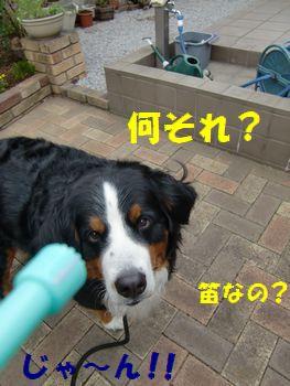 なにそれなにそれ笛なの~!?