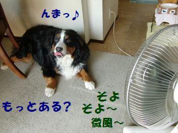 扇風機で海苔とんだね~。