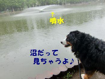 雨だって沼観察~!