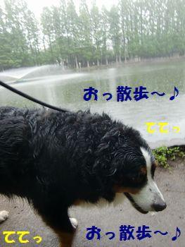 雨フリお散歩~沼の淵~♪