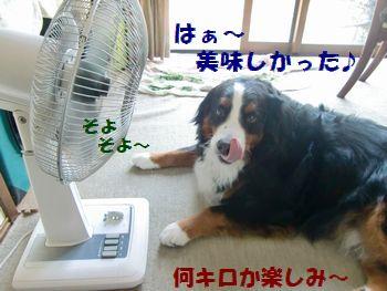 扇風機の前でのんびり~!