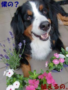 僕のお花?たくさん??