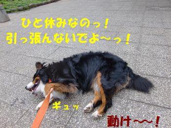 う~ごくもんか~!!