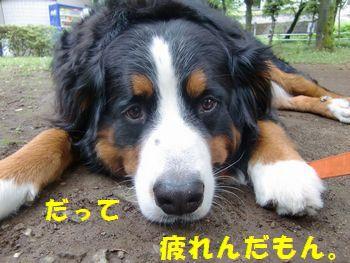 お散歩っていうのは疲れんだもん!