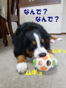 押しても鳴らないなんて変~!!