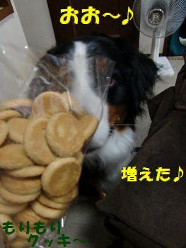 クッキーがモリモリになったよ~♪