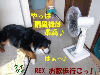 やっぱ夏は扇風機♪